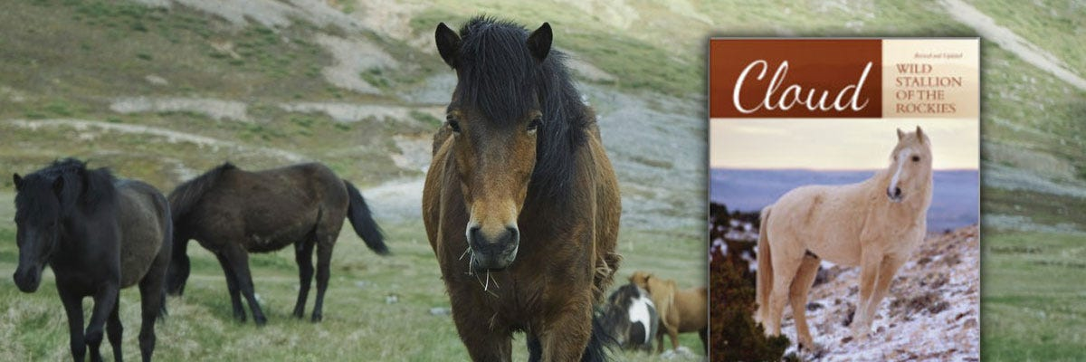 Wild Stallion of the Rockies Book