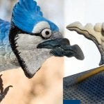 How to Carve a Blue Jay