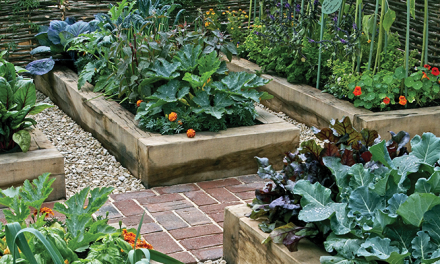 Six Reasons to Grow Vegetable with Raised Beds